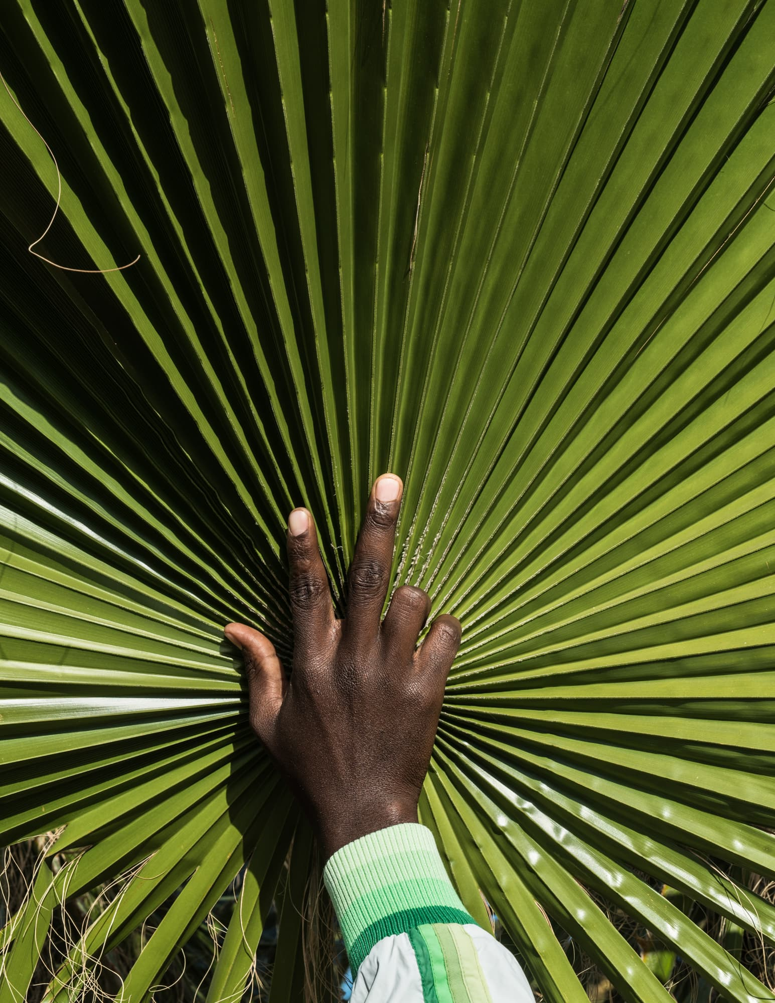 How to get home — Palm leaf and handsign to Extension 8