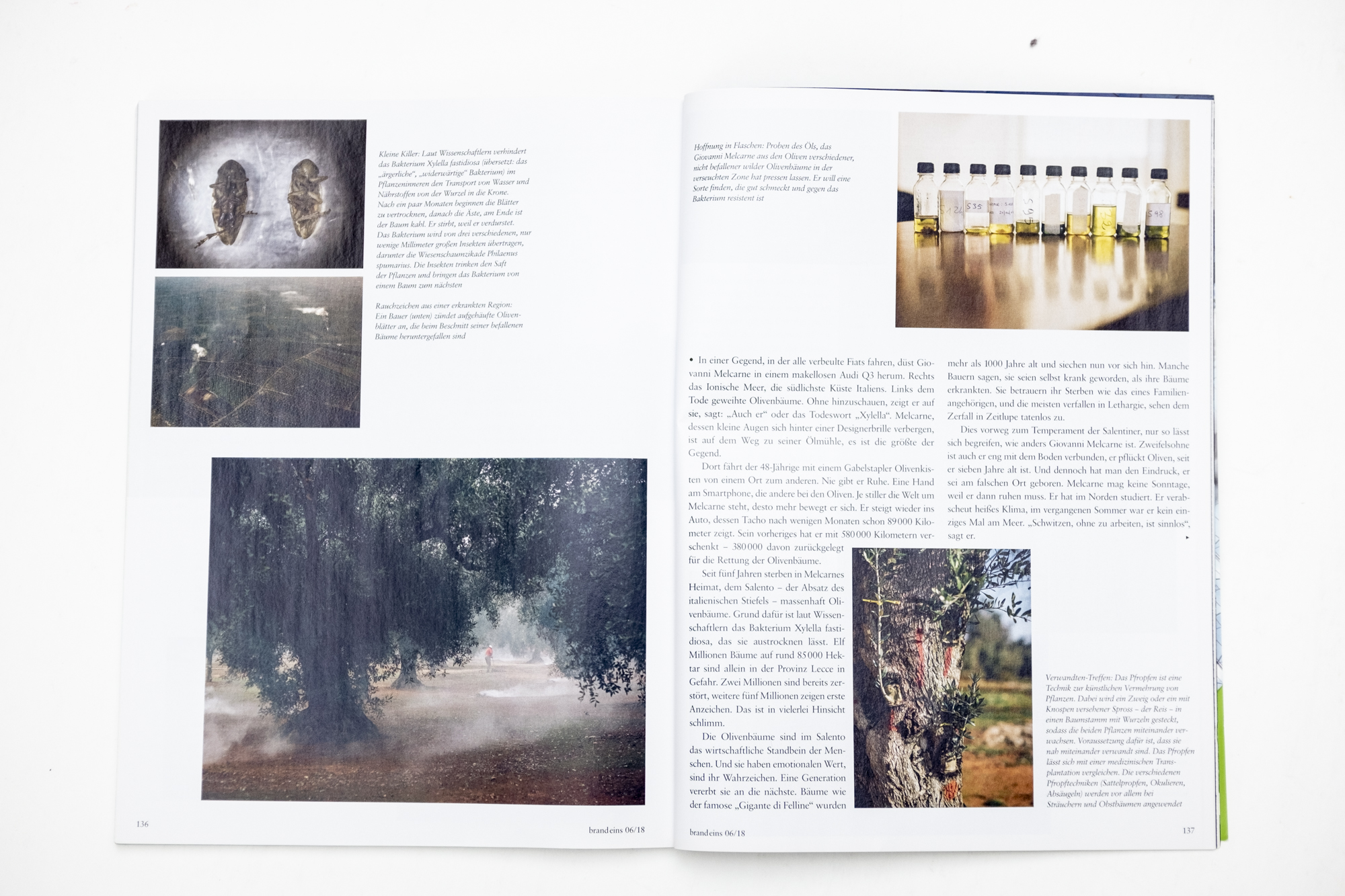 """Magazine spread of publication """"My father is in these trees"""" in brand eins magazine 06/2018"""