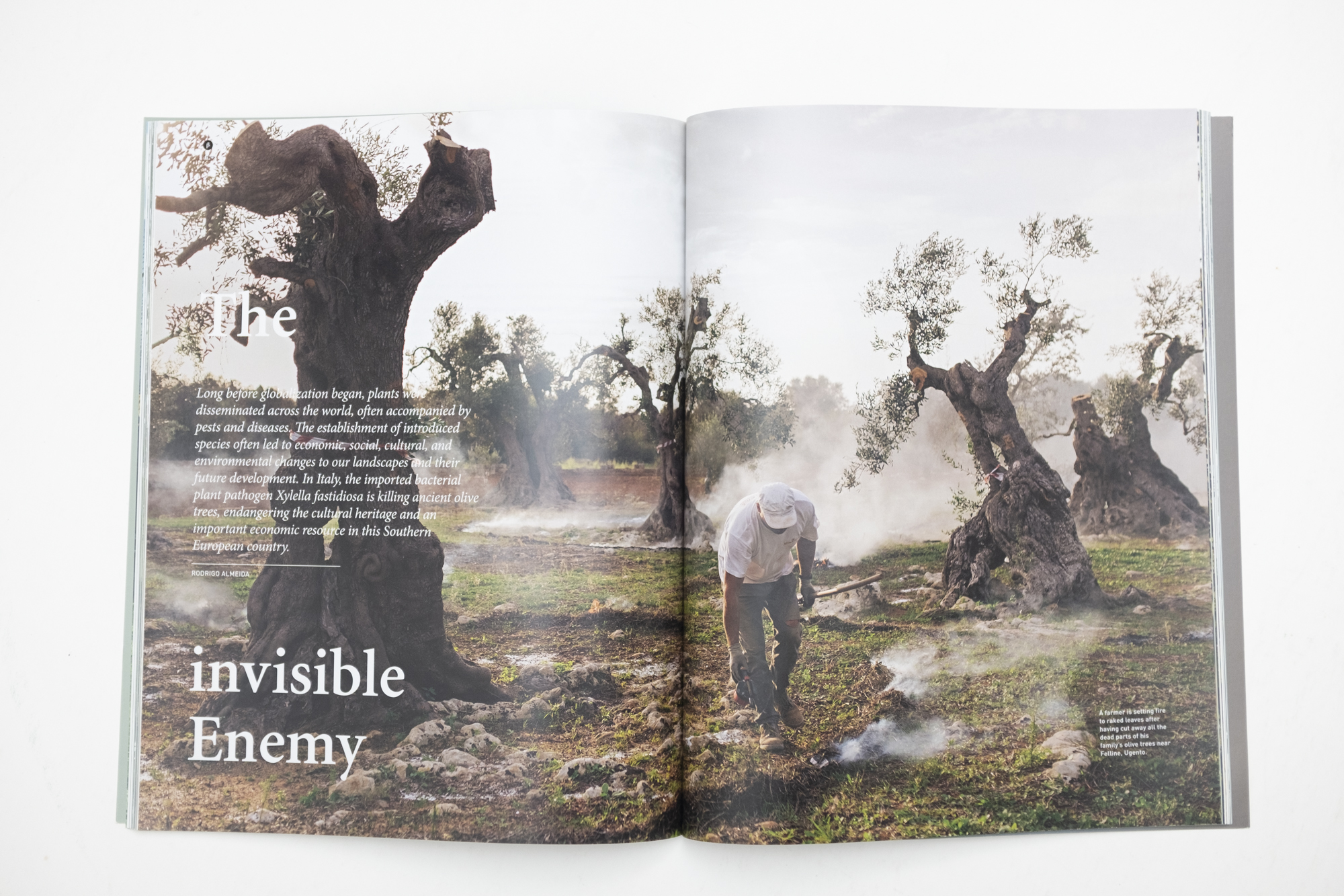 """Publication """"My father is in these trees"""" in TOPOS magazin no103 / 2018"""