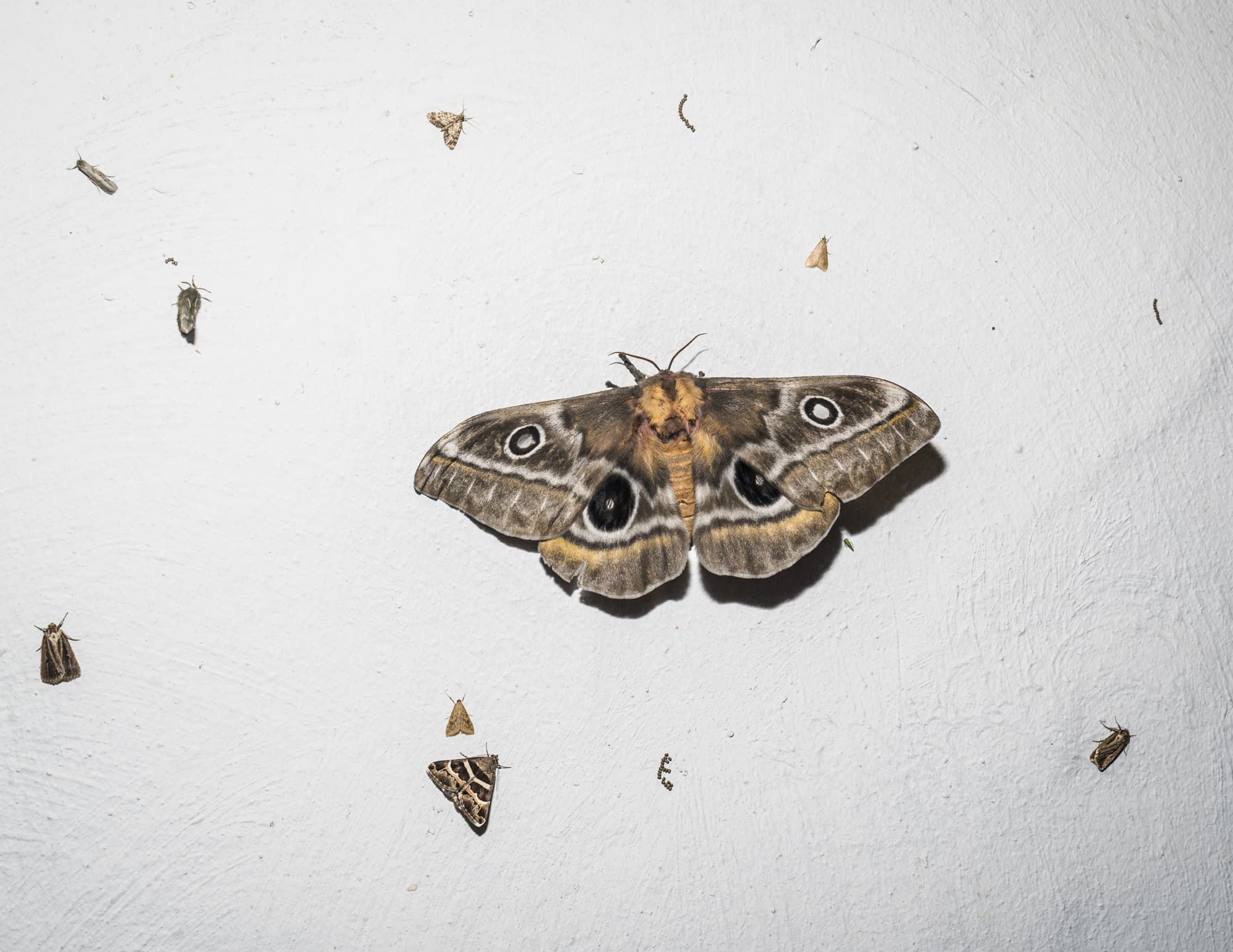 Moths in the light in South Africa on April 17th, 2017.